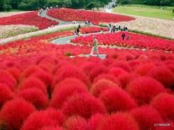 Monokültür Bahçe, Hitachi Sahil Bahçesi